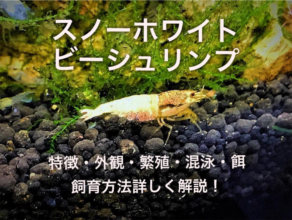 f:id:yumemiraitunagu:20210119164048j:plain