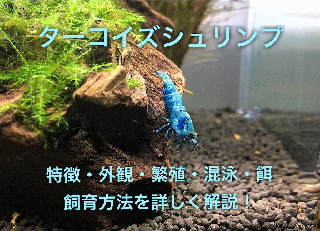 f:id:yumemiraitunagu:20210125020121j:plain