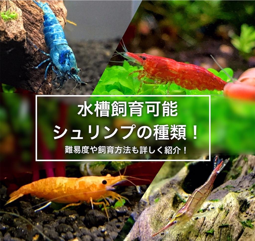 f:id:yumemiraitunagu:20210125041445j:plain