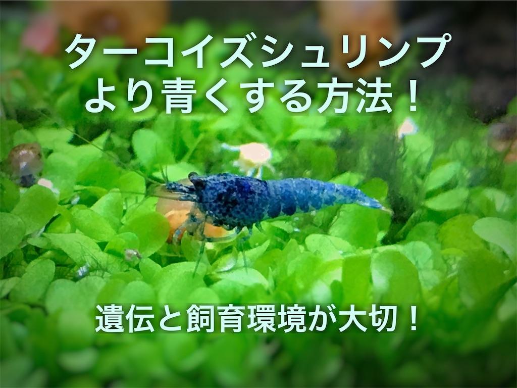 f:id:yumemiraitunagu:20210201113448j:plain