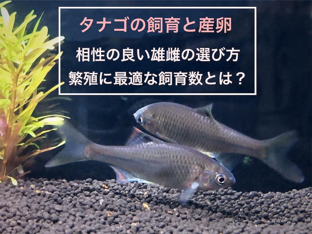 f:id:yumemiraitunagu:20210203041516j:plain