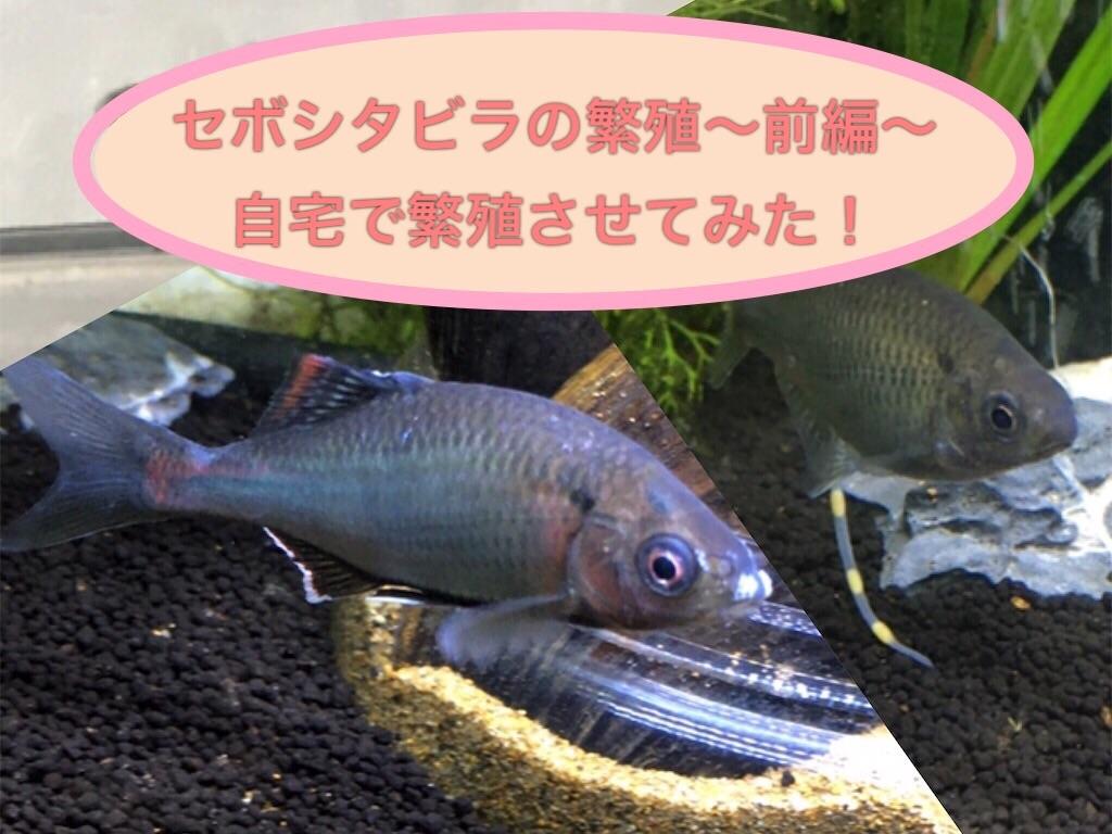 f:id:yumemiraitunagu:20210207114405j:plain