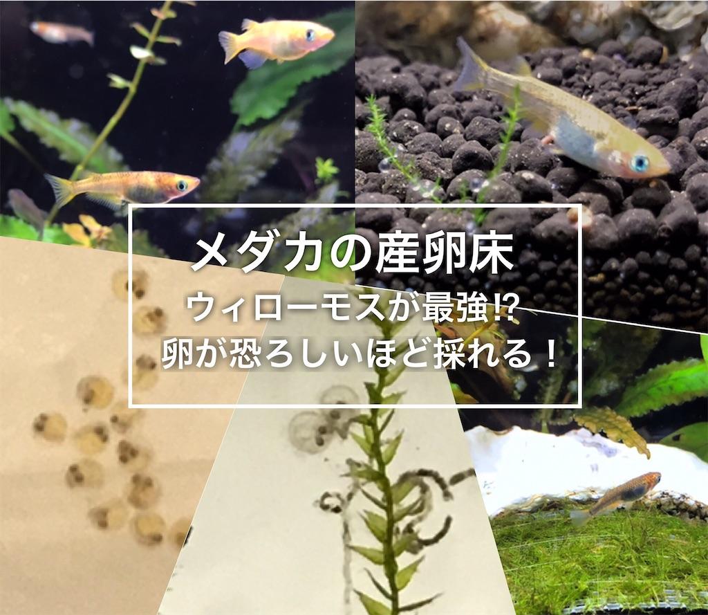f:id:yumemiraitunagu:20210209090111j:plain