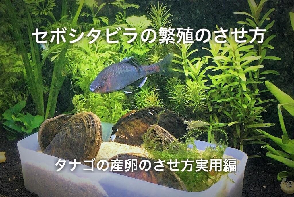 f:id:yumemiraitunagu:20210213130332j:plain