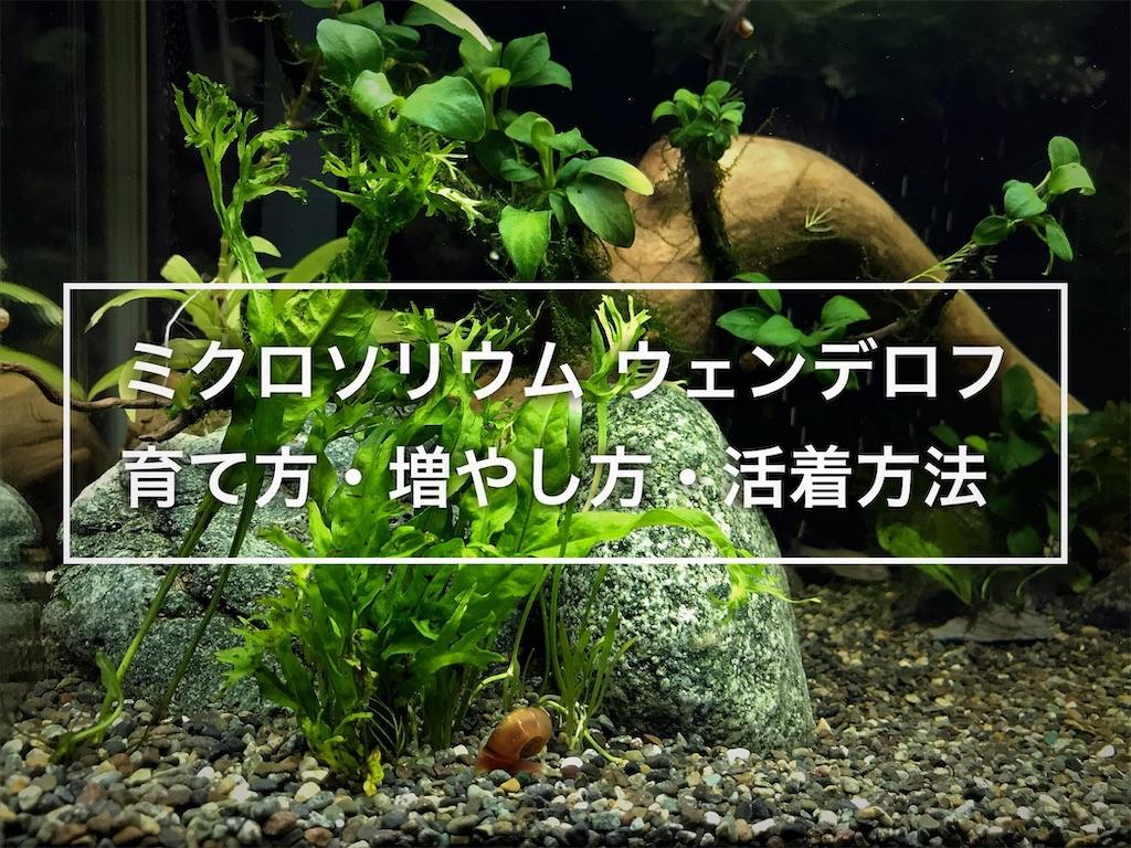 f:id:yumemiraitunagu:20210221154939j:plain