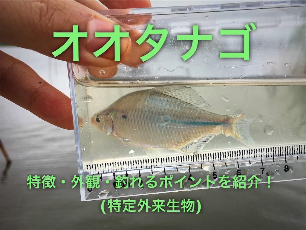 f:id:yumemiraitunagu:20210301043041j:plain