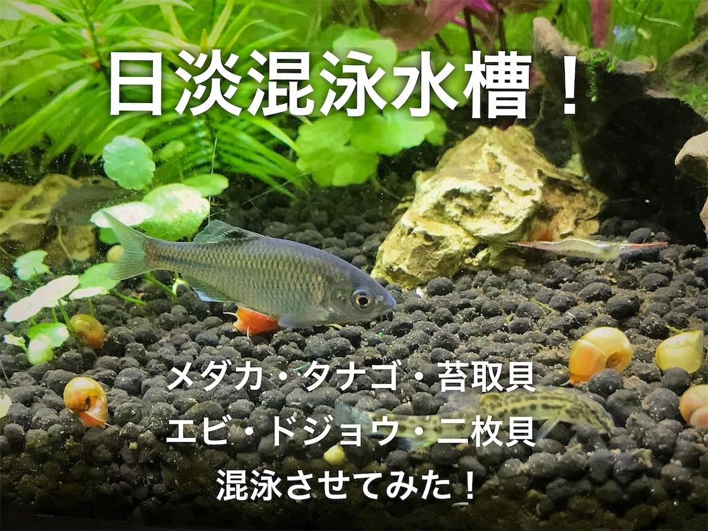 f:id:yumemiraitunagu:20210317123400j:plain