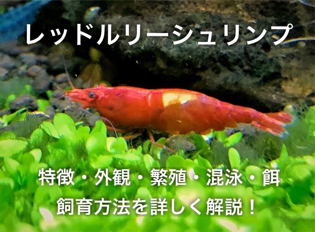f:id:yumemiraitunagu:20210323040014j:plain