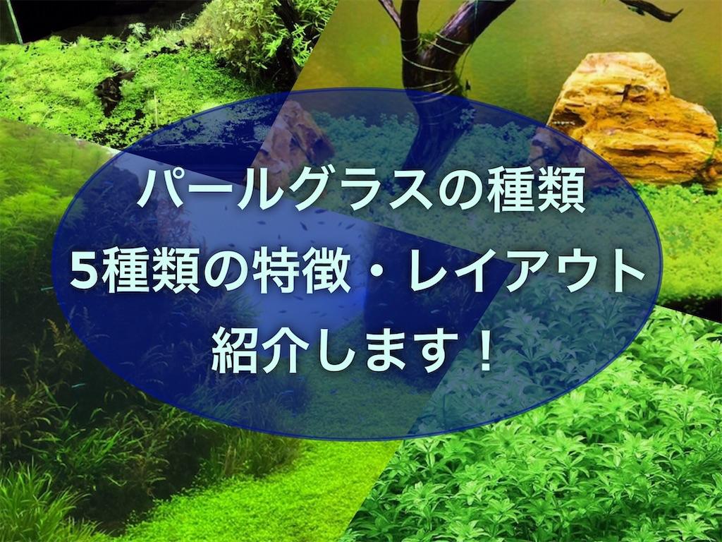 f:id:yumemiraitunagu:20210429053723j:plain