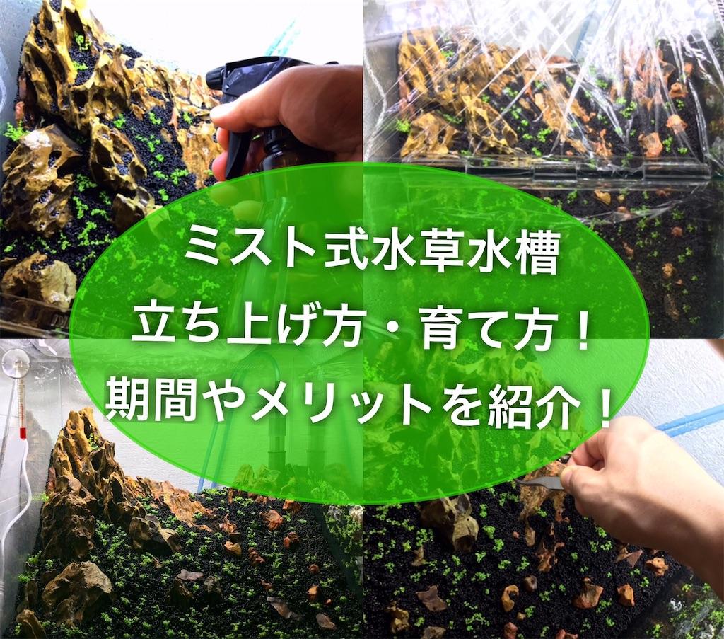 f:id:yumemiraitunagu:20210501085740j:plain