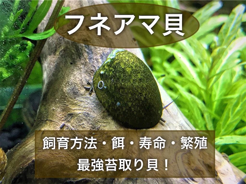 f:id:yumemiraitunagu:20210504012100j:plain