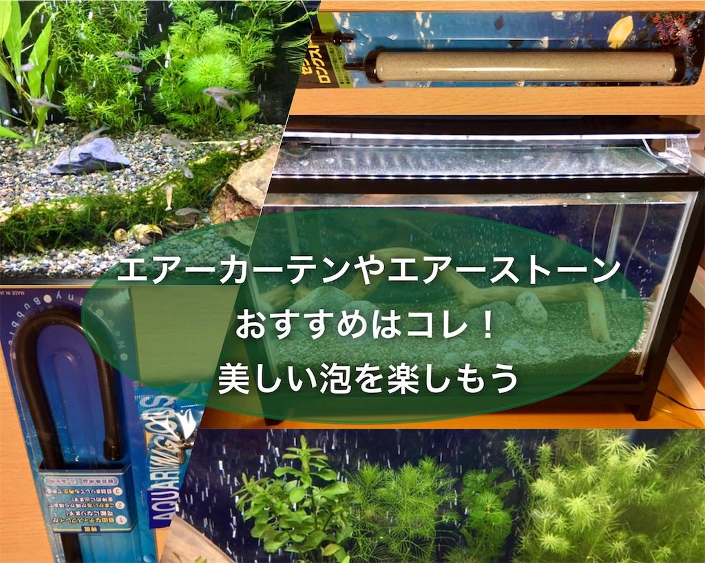 f:id:yumemiraitunagu:20210505095925j:plain