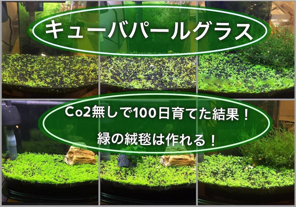 f:id:yumemiraitunagu:20210507165645j:plain
