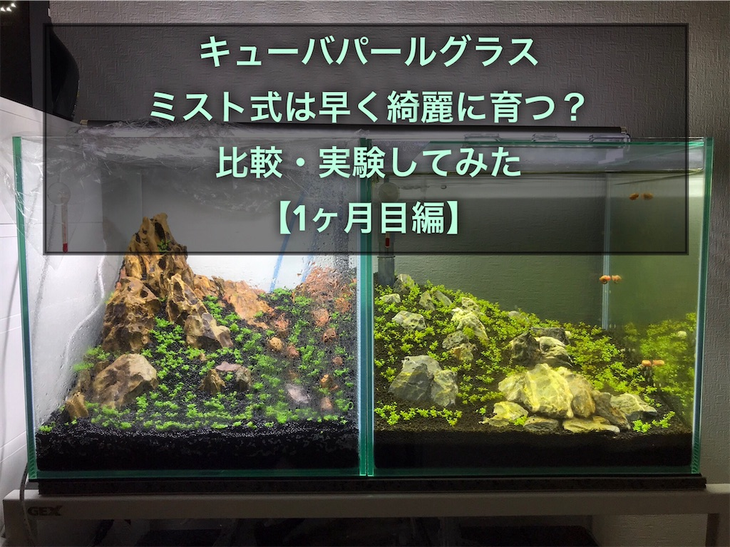 f:id:yumemiraitunagu:20210515045159j:plain