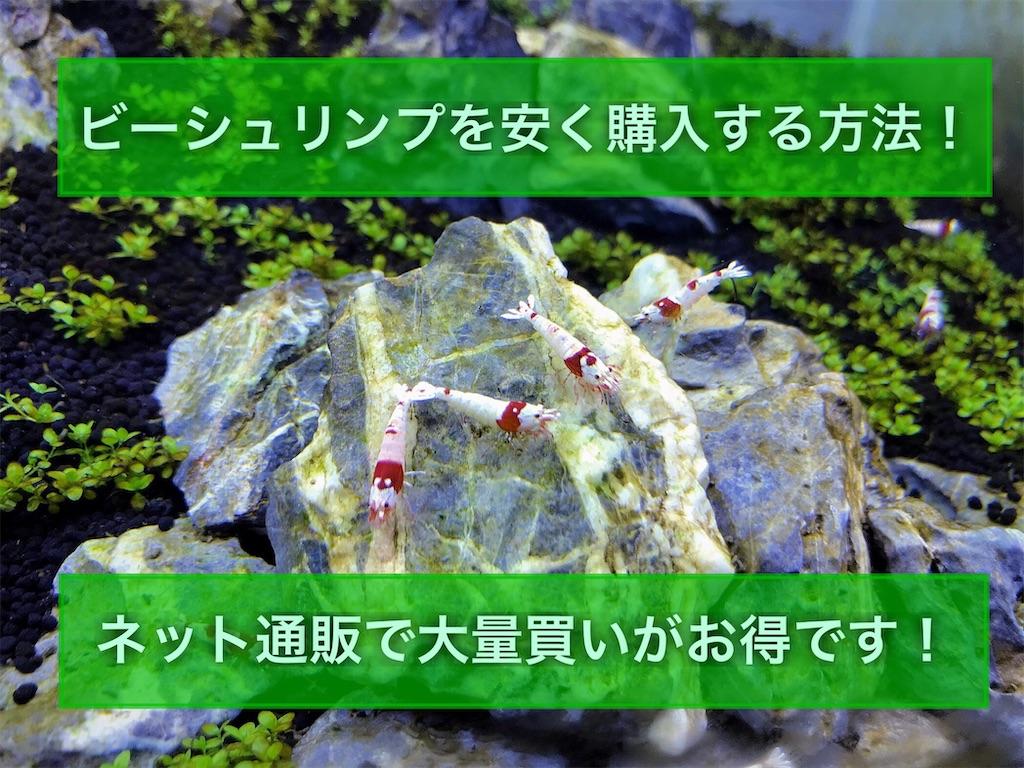 f:id:yumemiraitunagu:20210518102544j:plain