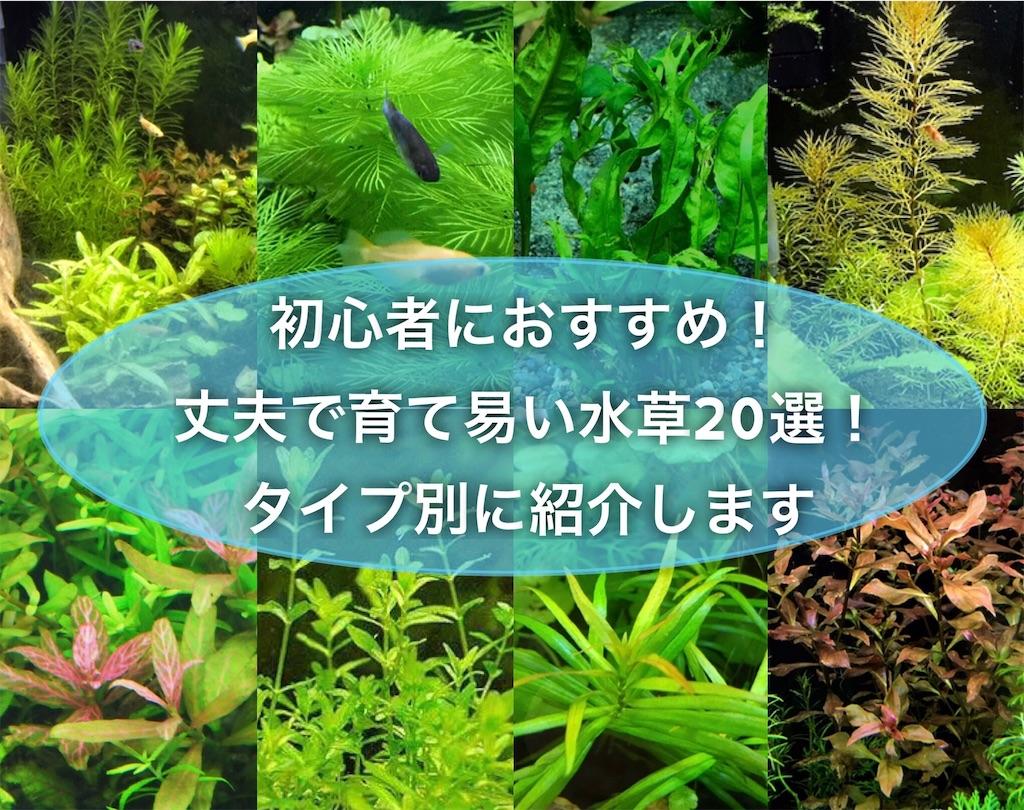 f:id:yumemiraitunagu:20210524113508j:plain