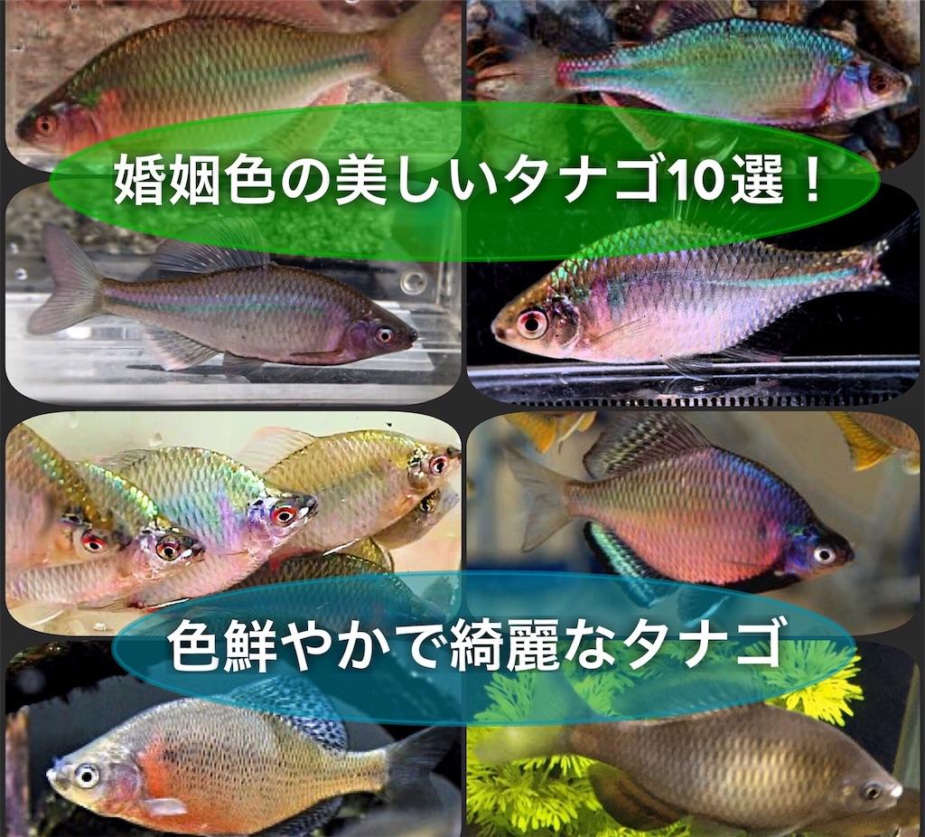 f:id:yumemiraitunagu:20210527052655j:plain