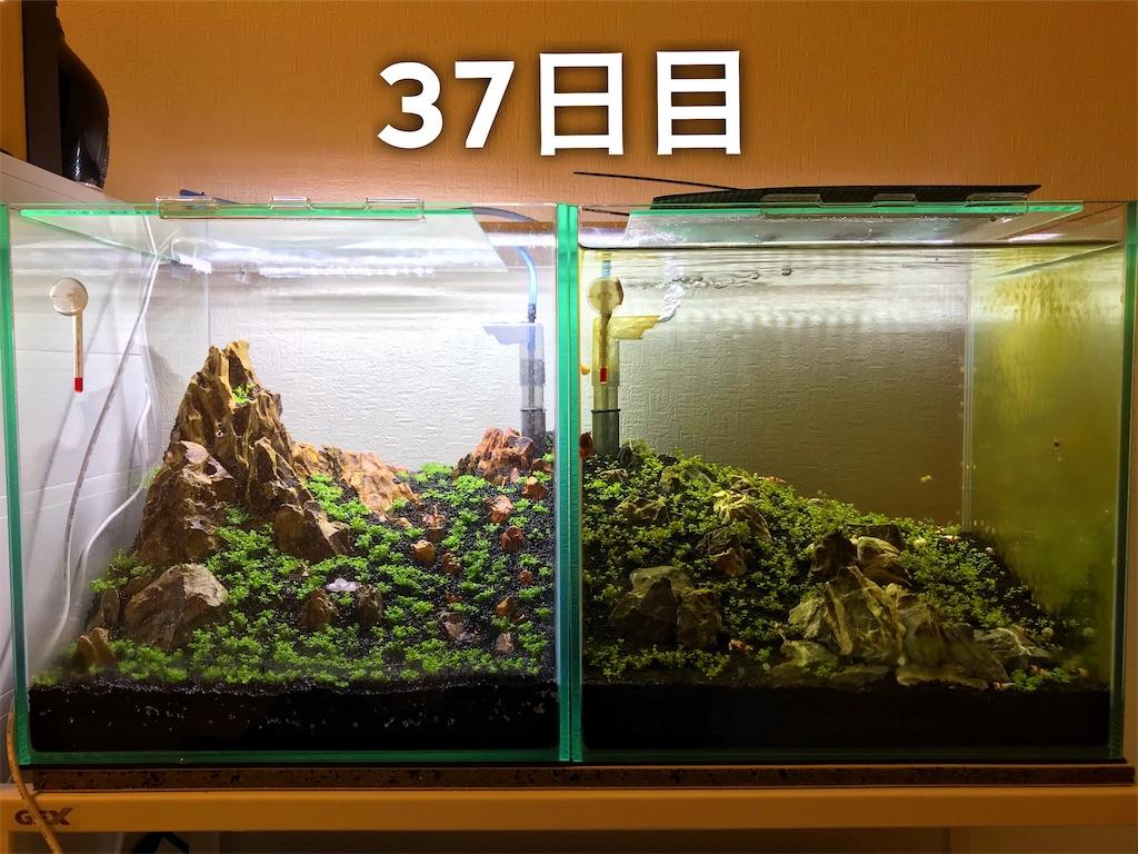 f:id:yumemiraitunagu:20210616022659j:plain