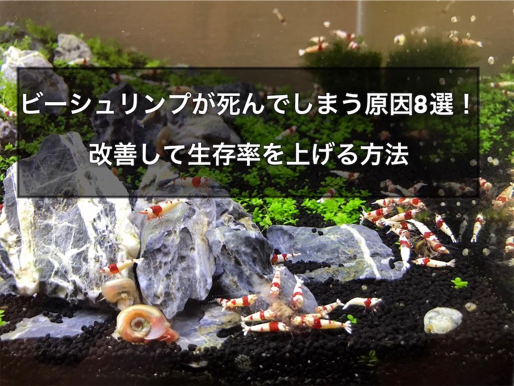 f:id:yumemiraitunagu:20210621154755j:plain