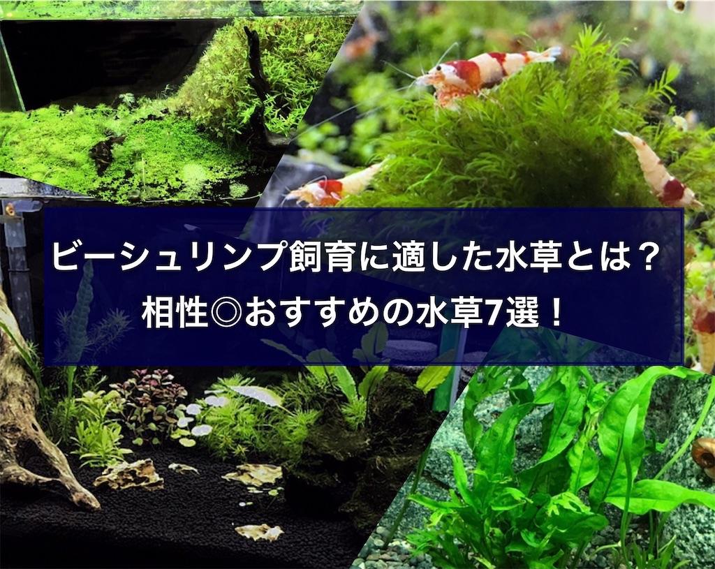 f:id:yumemiraitunagu:20210626110240j:plain