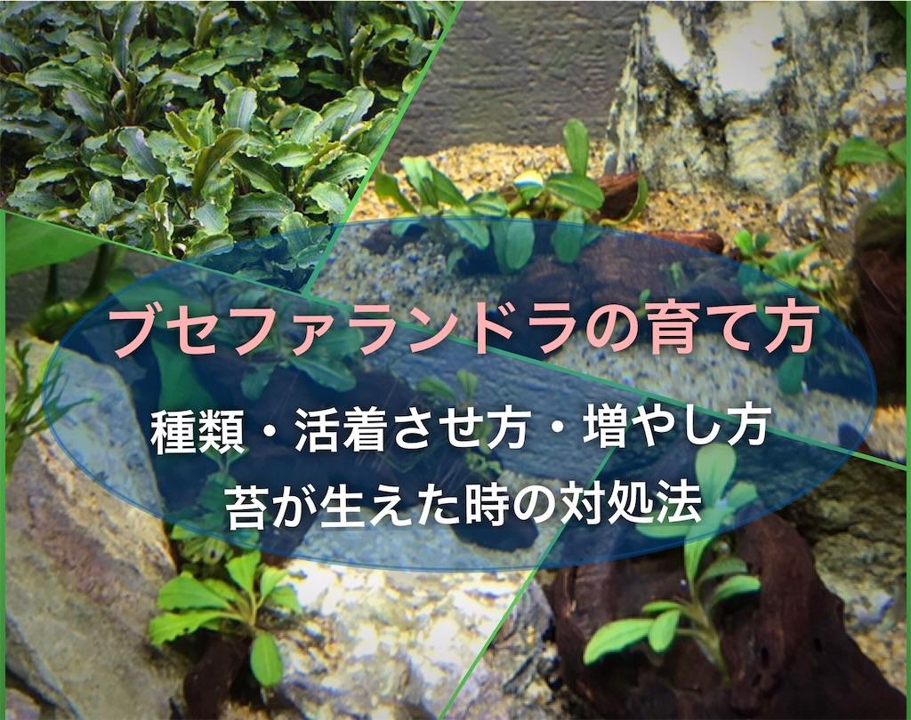 f:id:yumemiraitunagu:20210710164317j:plain