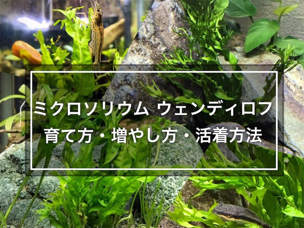 f:id:yumemiraitunagu:20210721090939j:plain