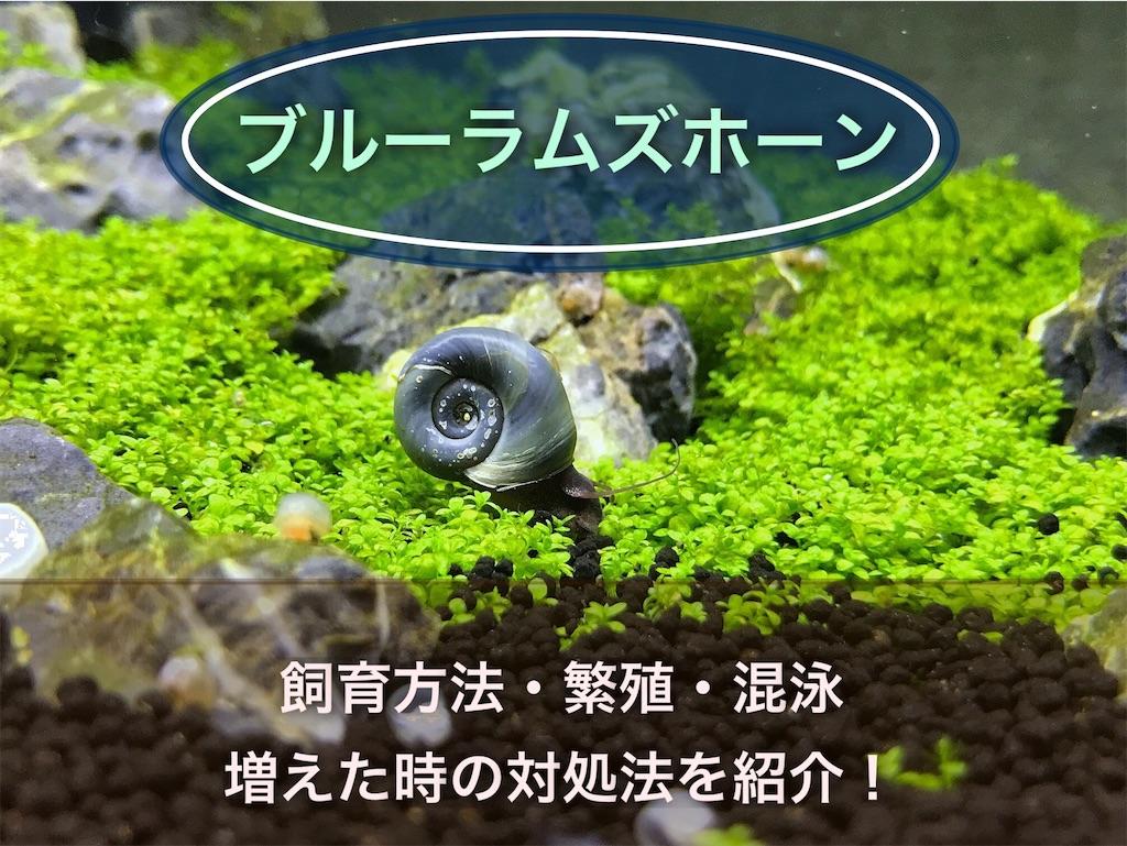 f:id:yumemiraitunagu:20210721152315j:plain