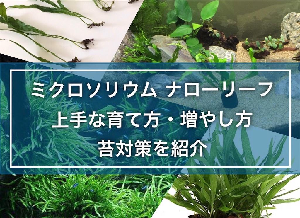 f:id:yumemiraitunagu:20210726051229j:plain