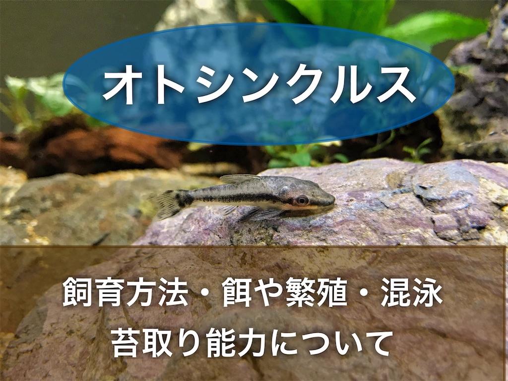 f:id:yumemiraitunagu:20210727042203j:plain