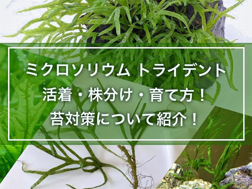 f:id:yumemiraitunagu:20210729055200j:plain