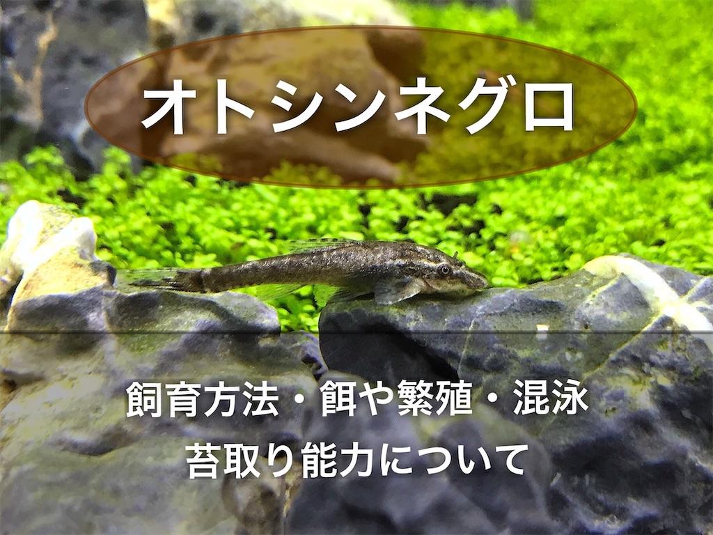 f:id:yumemiraitunagu:20210731073137j:plain