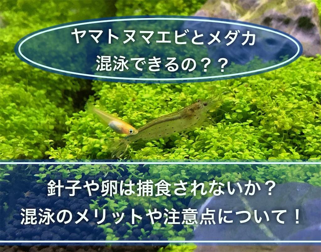 f:id:yumemiraitunagu:20210801172241j:plain