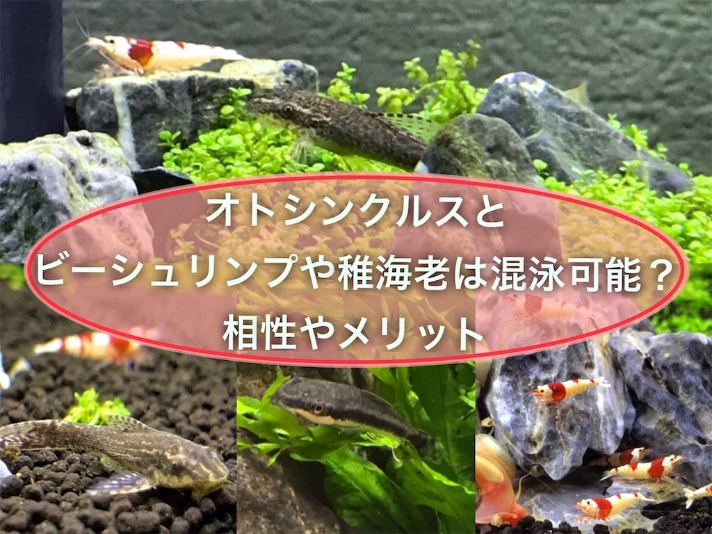 f:id:yumemiraitunagu:20210803220646j:plain