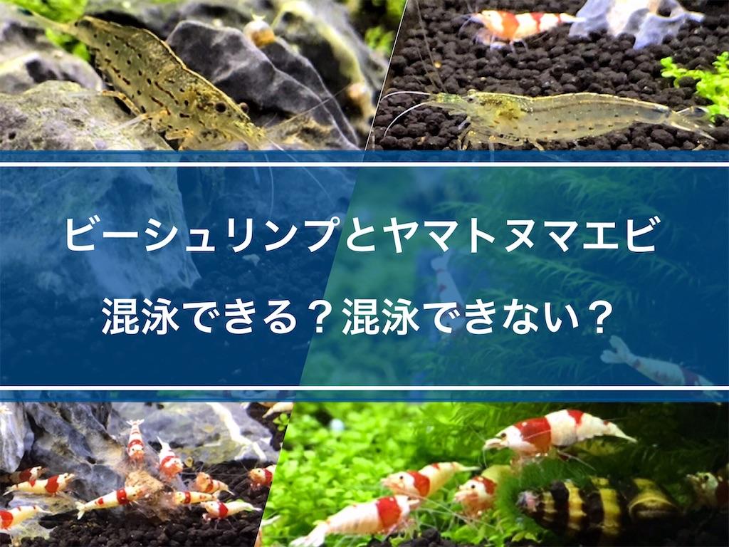 f:id:yumemiraitunagu:20210810054957j:plain