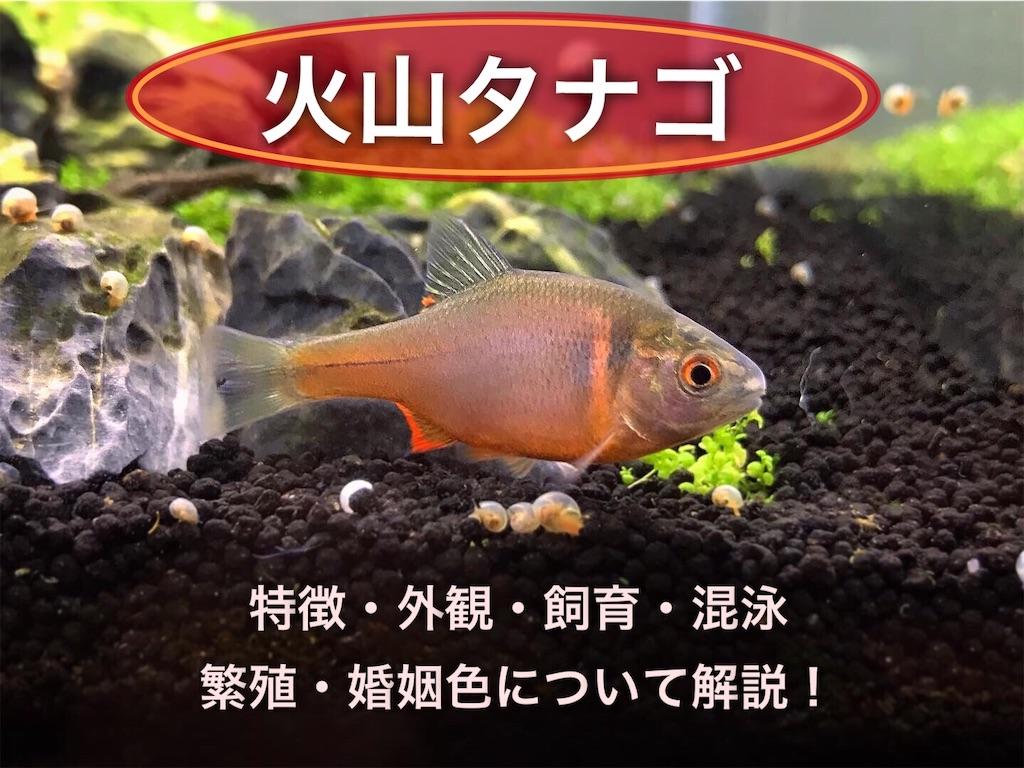 f:id:yumemiraitunagu:20210812094504j:plain
