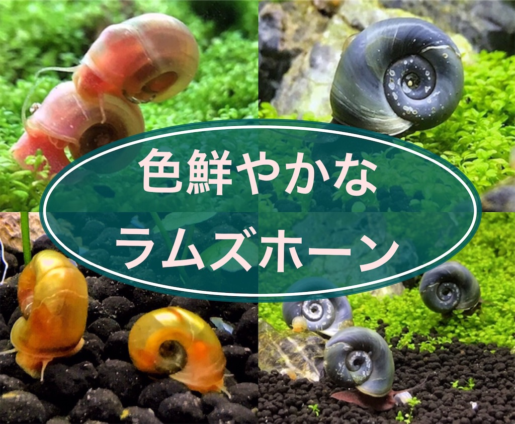 f:id:yumemiraitunagu:20210815144610j:plain