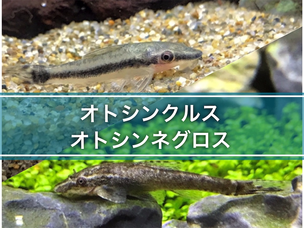 f:id:yumemiraitunagu:20210817065701j:plain