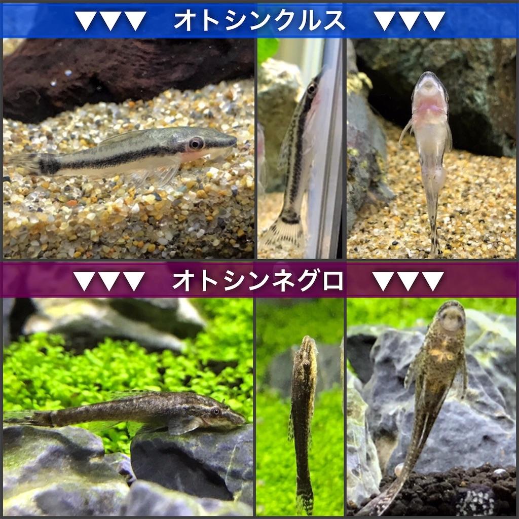 f:id:yumemiraitunagu:20210817224831j:plain