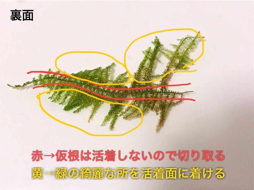 f:id:yumemiraitunagu:20210907110002j:plain