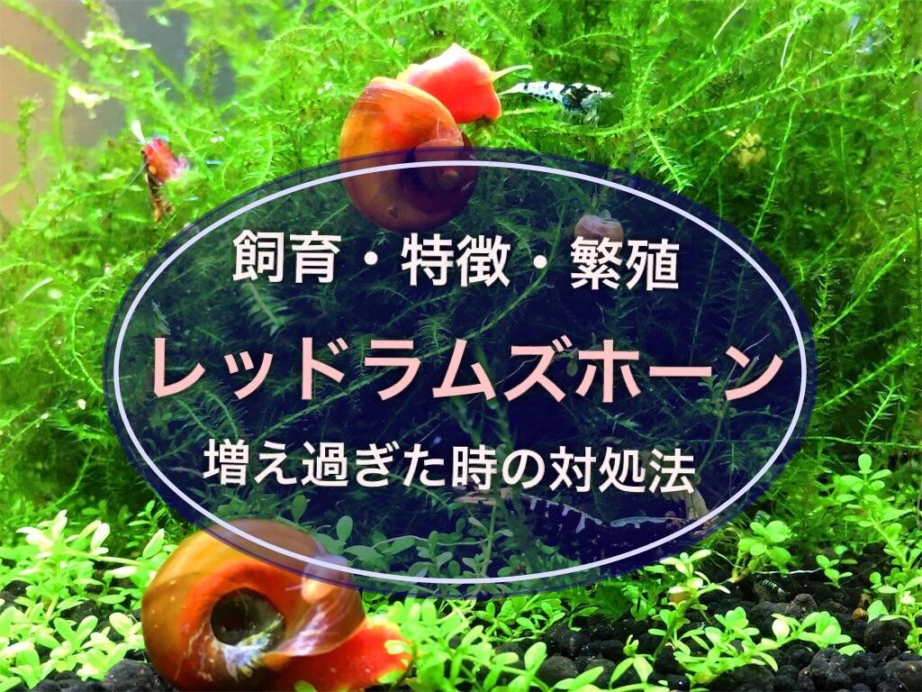 f:id:yumemiraitunagu:20210910140413j:plain