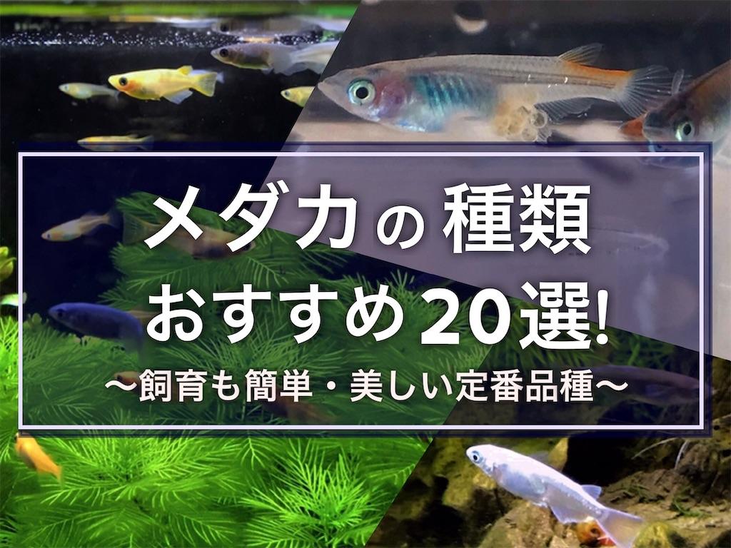 f:id:yumemiraitunagu:20210912181041j:plain