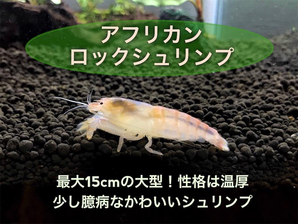 f:id:yumemiraitunagu:20210919000413j:plain