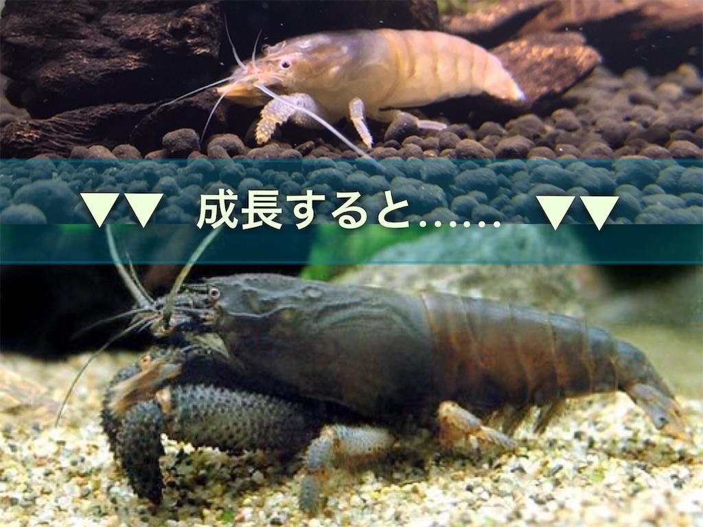 f:id:yumemiraitunagu:20210919000429j:plain