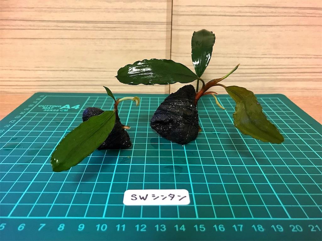 f:id:yumemiraitunagu:20210919061921j:plain