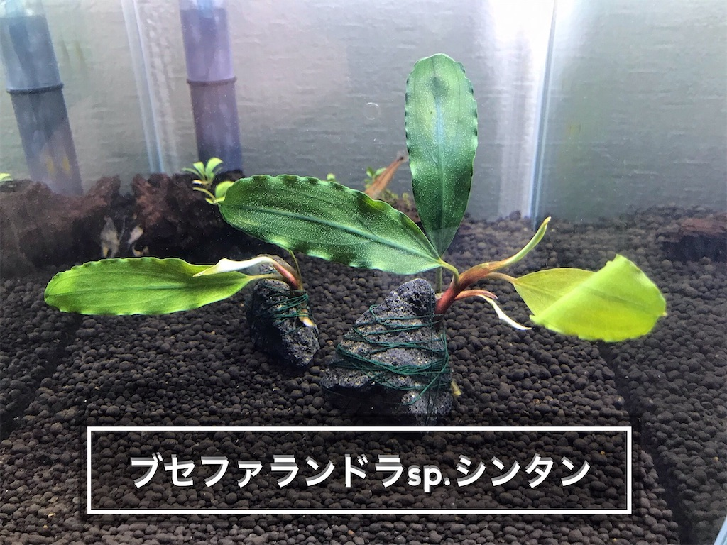 f:id:yumemiraitunagu:20210919104822j:plain