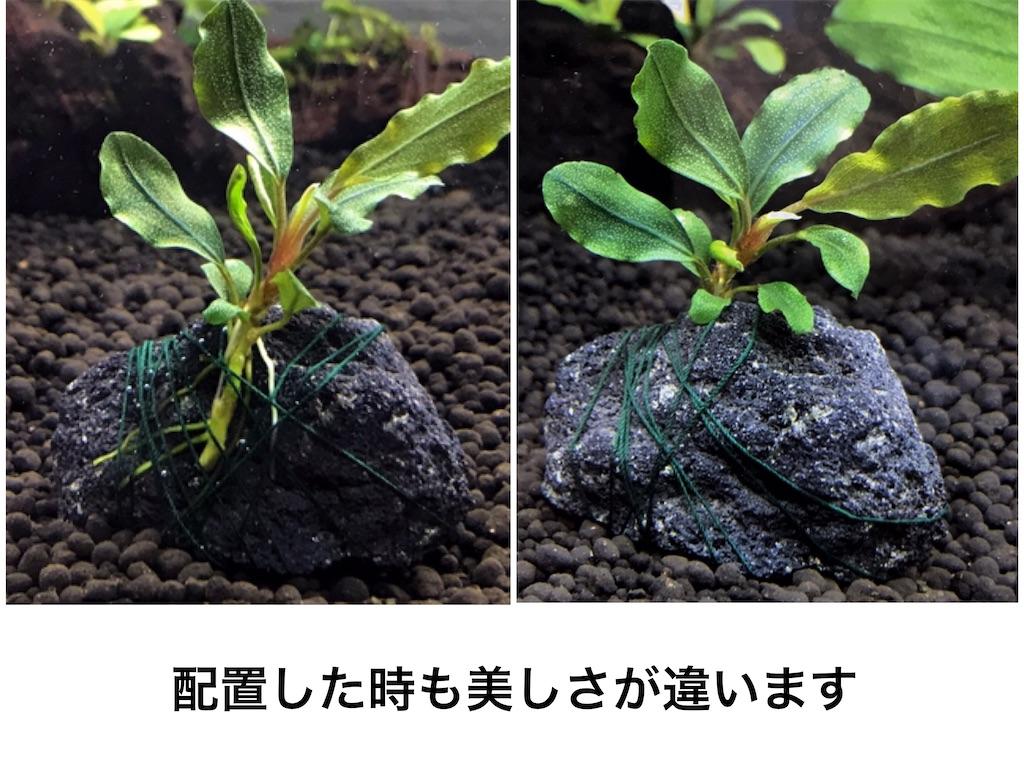 f:id:yumemiraitunagu:20210920124517j:plain