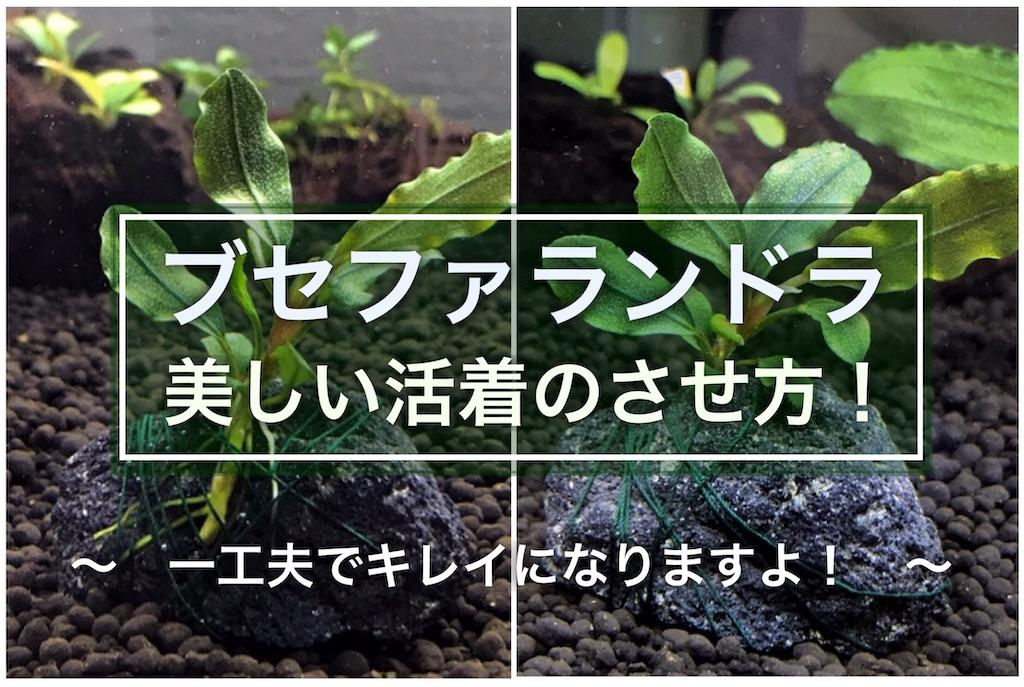 f:id:yumemiraitunagu:20210925104853j:plain