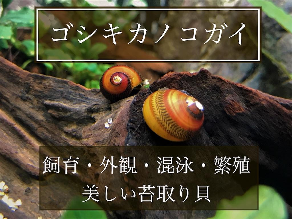 f:id:yumemiraitunagu:20210930063810j:plain