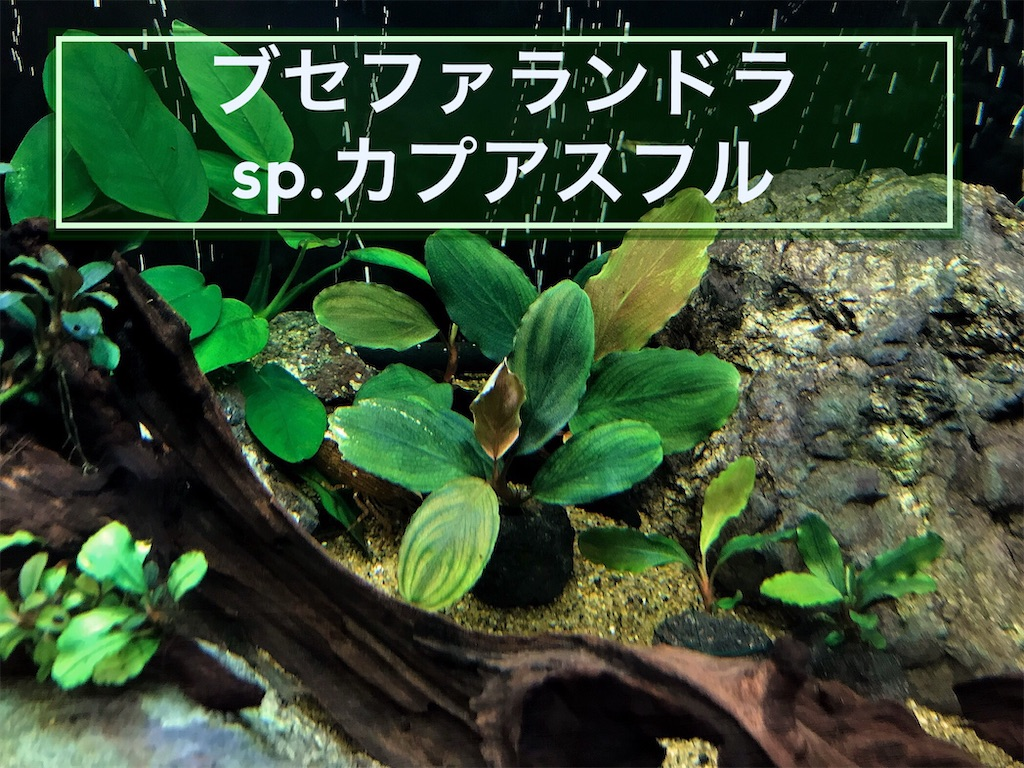 f:id:yumemiraitunagu:20211010231643j:plain