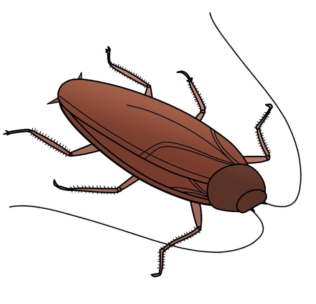 ゴキブリ 多い 今年